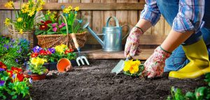Landscaping Ideas for Texas Homes