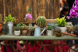 The Best House Plants for Your New Home