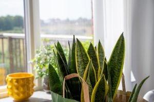 Low-Maintenance House Plants